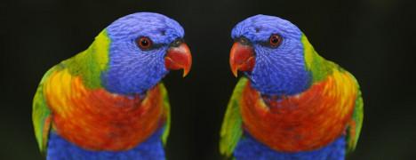 #cover #oiseau