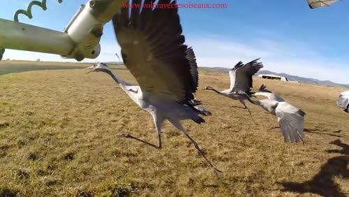 Quand les hommes volent avec les oiseaux...